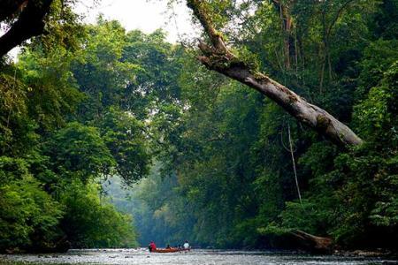 Taman-Negara-Malaysia-2